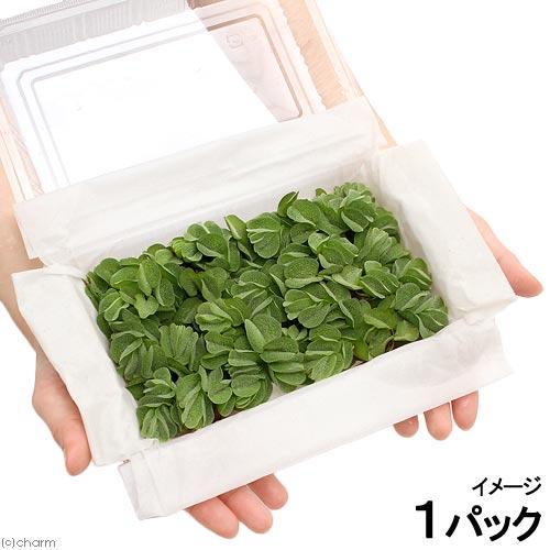 (浮草)オオサンショウモ 大パック(無農薬)(約30株)(1パック)