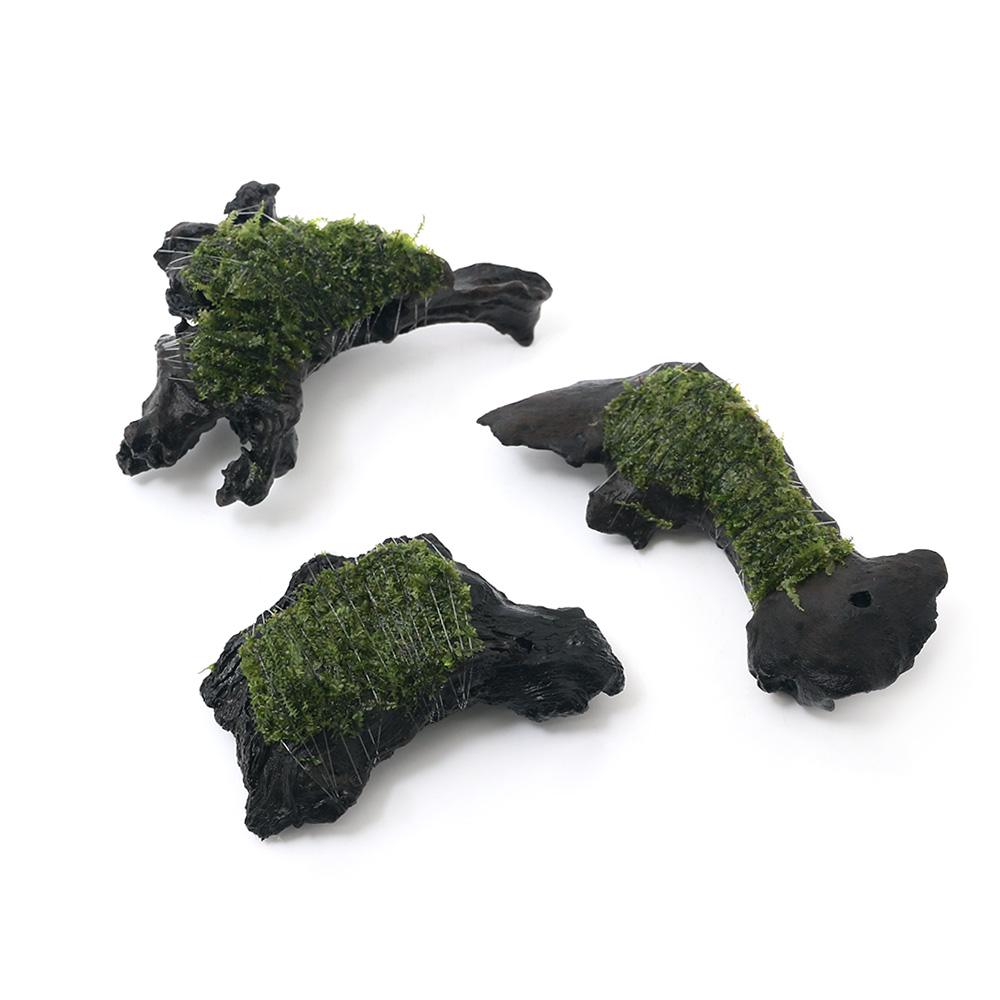 (水草)巻きたて ウロコゴケsp.スラウェシ 流木 SSサイズ(約10cm)(無農薬)(1本)
