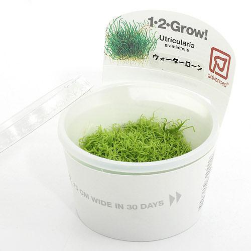 水草 組織培養1-2-GROW ウォーターローン 数量限定 トロピカ製 無農薬 1カップ 送料無料でお届けします