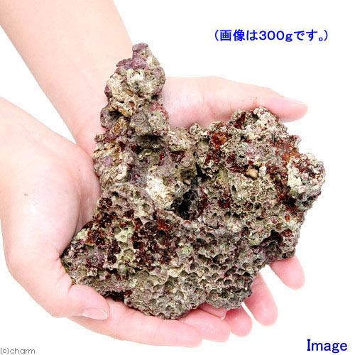 (海水魚)ライブロック SSサイズ(1kg)(形状お任せ) 北海道航空便要保温
