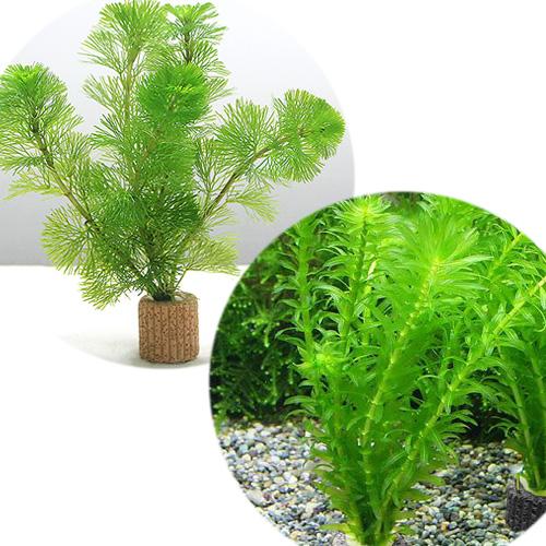 水草 ライフマルチ 茶 高品質新品 メダカ 1セット 金魚藻セット 新着セール