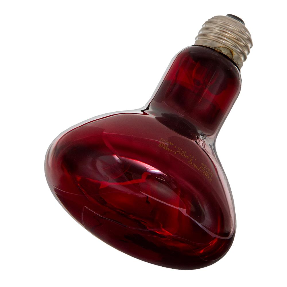 ZOOMED 赤外線保温電球 インフラレッドヒートランプ 150W 安全 保温球 爬虫類 超美品再入荷品質至上 関東当日便