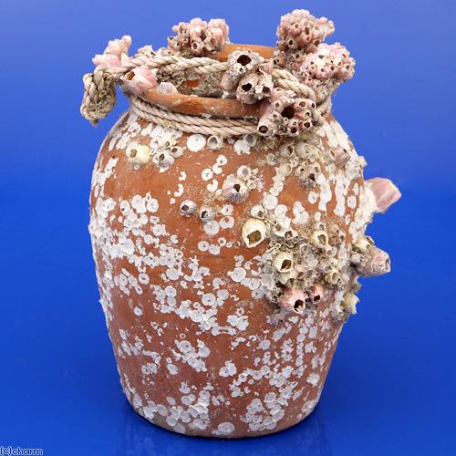 (海水魚 貝殻)一点物 フジツボの殻付きタコツボ No.2 KS-3245 沖縄別途送料