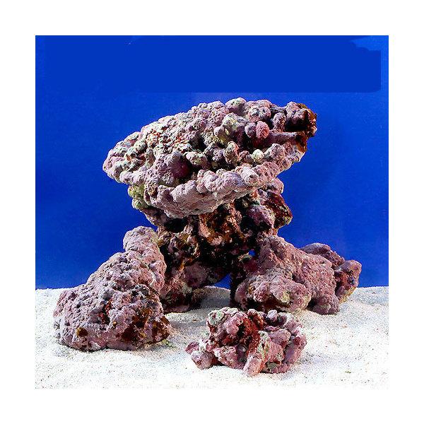(海水魚)ライブロック EXSグレード レッドロック 30cmキューブ水槽セット(1セット)(形状お任せ) 沖縄別途送料 北海道・九州航空便要保温