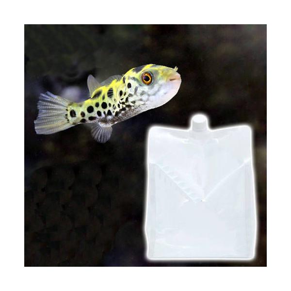 (海水魚)足し水くん 汽水 3L(3袋セット) 航空便不可