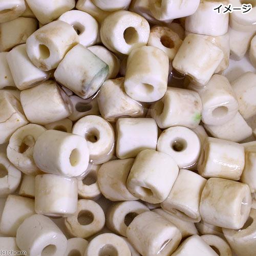 (海水魚)ろ材 海水用 バクテリア付き ライブろ材 グラスリング α(アルファ) Mサイズ 1kg