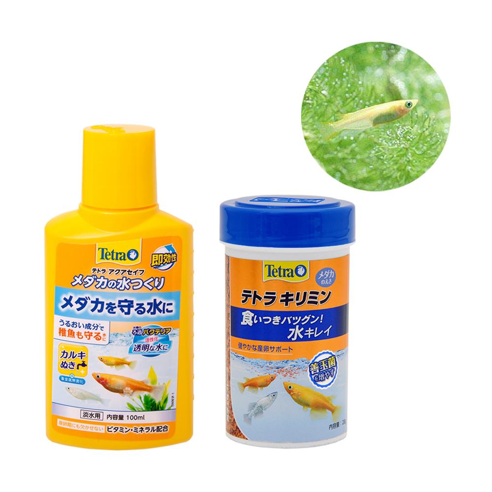 (めだか)ヒメダカ(6匹) 安心スタートセット(餌&水質調整剤つき) 本州四国限定