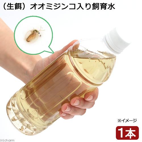 生餌 オオミジンコ入り飼育水 500ml 大特価 大特価!!