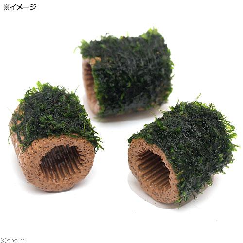 (水草)巻きたて ライフマルチ(茶) フレームモス(無農薬)(1個) 北海道航空便要保温