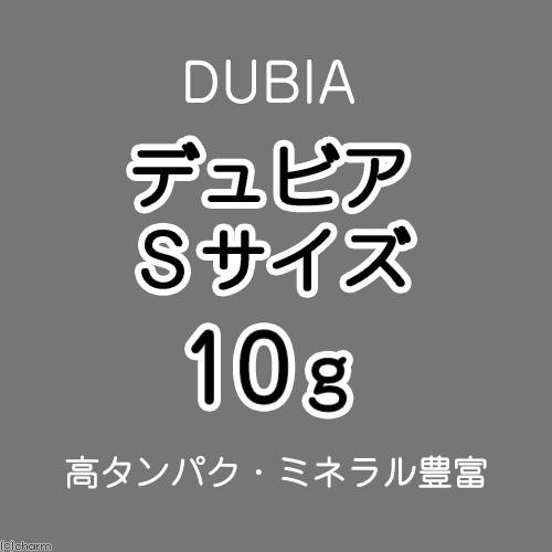 charm デュビア SMサイズ(2~2.5cm) 10g(約20匹)