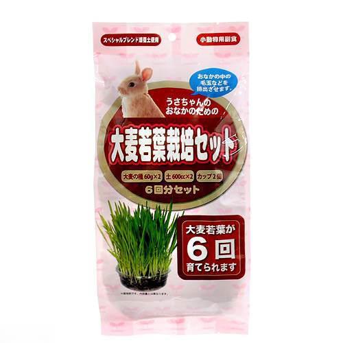 アラタ うさちゃん用 在庫一掃 大麦若葉栽培セット 6回分 おやつ 関東当日便 正規激安 うさぎ