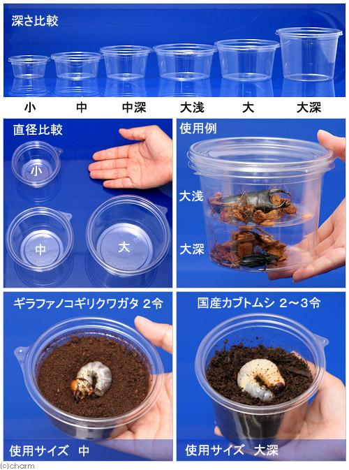 プリンカップ 大浅 約370ml×100個 (DT129−430TC) カブトムシ クワガタ 卵 幼虫 繁殖 関東当日便