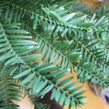 【現品】ジュラシックツリー 樹高95cm 005