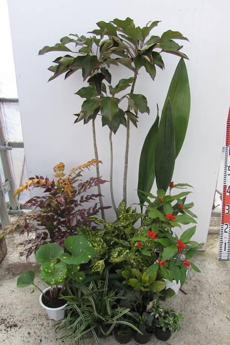 日陰で育つ植物 シェードガーデンセットDX【5月13日より順次発送】