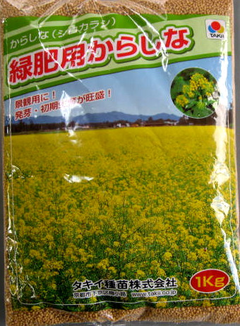 Chigusa rakuten global market mustard seeds brassica juncea mustard seeds brassica juncea yellow flowers happyness 1 kg mightylinksfo