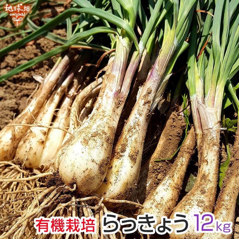らっきょう 有機栽培 12kg 土付き 鹿児島県産 化学肥料・農薬不使用 国産 JAS認証 大きさおまかせ 冷蔵便 送料無料 業務用 お徳用 漬物