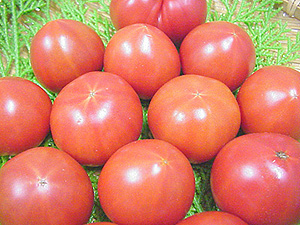 ★ gifts for Kochi production and fruit tomato (about 1 kg boxes / ball number of Omakase)