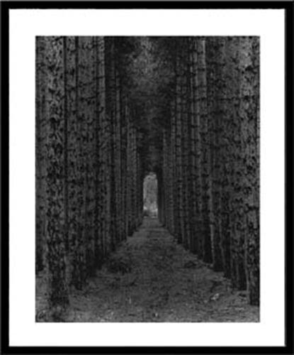 【取寄品】【送料無料】Monte Nagier Red Pines Empire Ml 額付グラフィックアートポスター通販2/21朝10時まで
