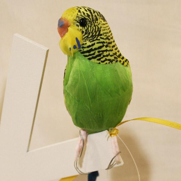 セキセイインコのオブジェ 希望者のみラッピング無料 プエブコ PUEBCO 超特価SALE開催 ARTIFICIAL BIRDS バードオブジェBudgieセキセイインコ グリーン 124070