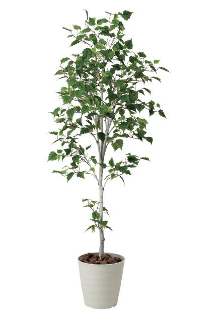【送料無料】《アートグリーン》《人工観葉植物》光触媒 光の楽園 白樺シングル1.8