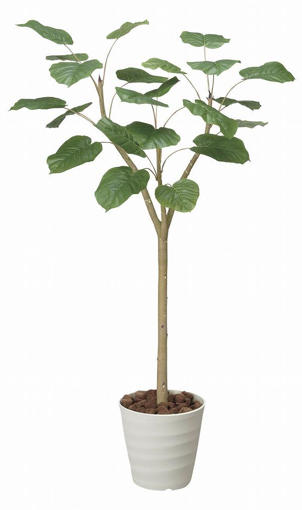 【送料無料】《アートグリーン》《人工観葉植物》光触媒 光の楽園 ウンベラ―ダ1.55