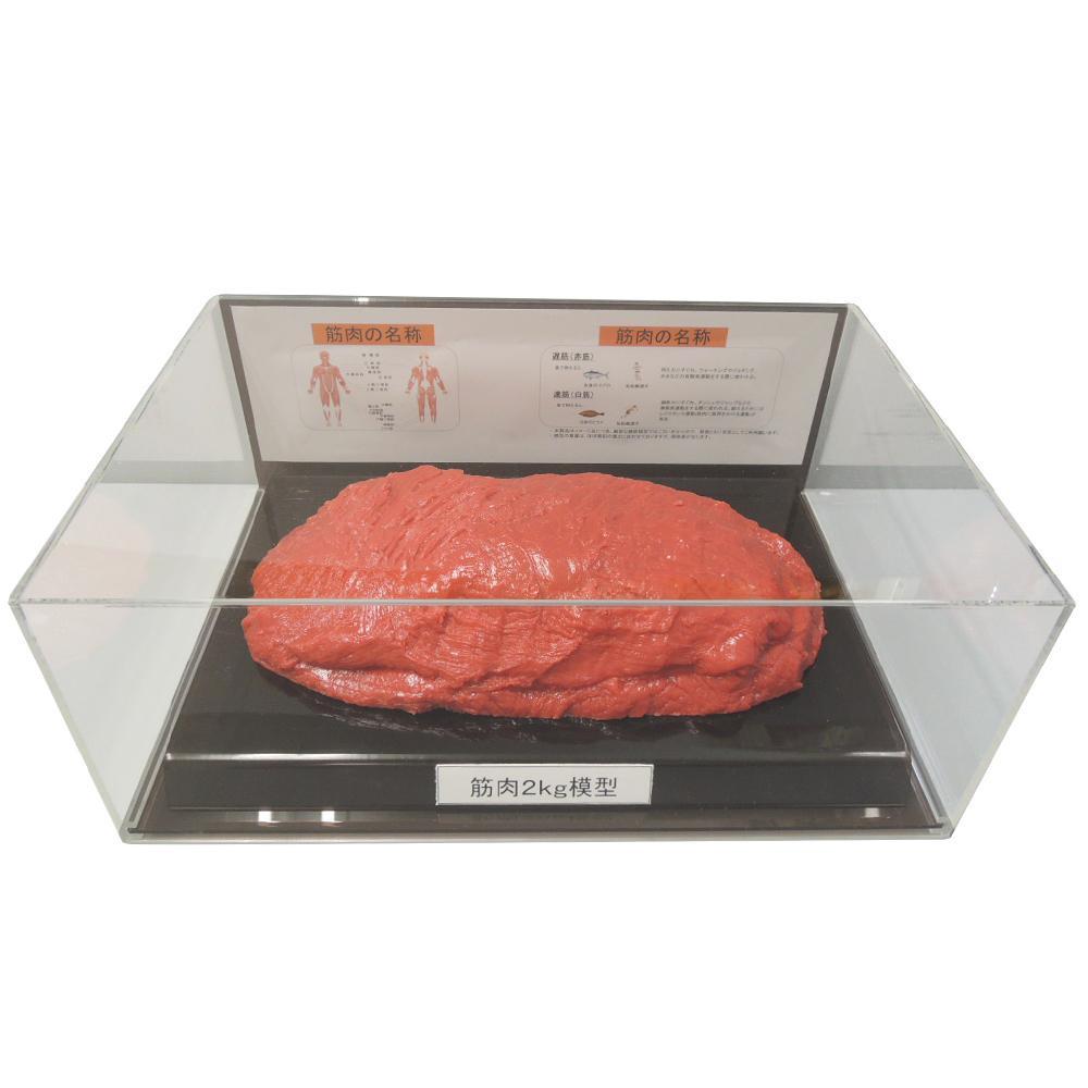筋肉模型フィギュアケース入 2kg IP-987「他の商品と同梱不可/北海道、沖縄、離島別途送料」
