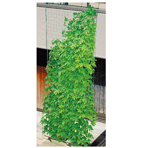 【代引不可】DAIM(第一ビニール)緑のカーテン 5m吊下げ 180cm 13022