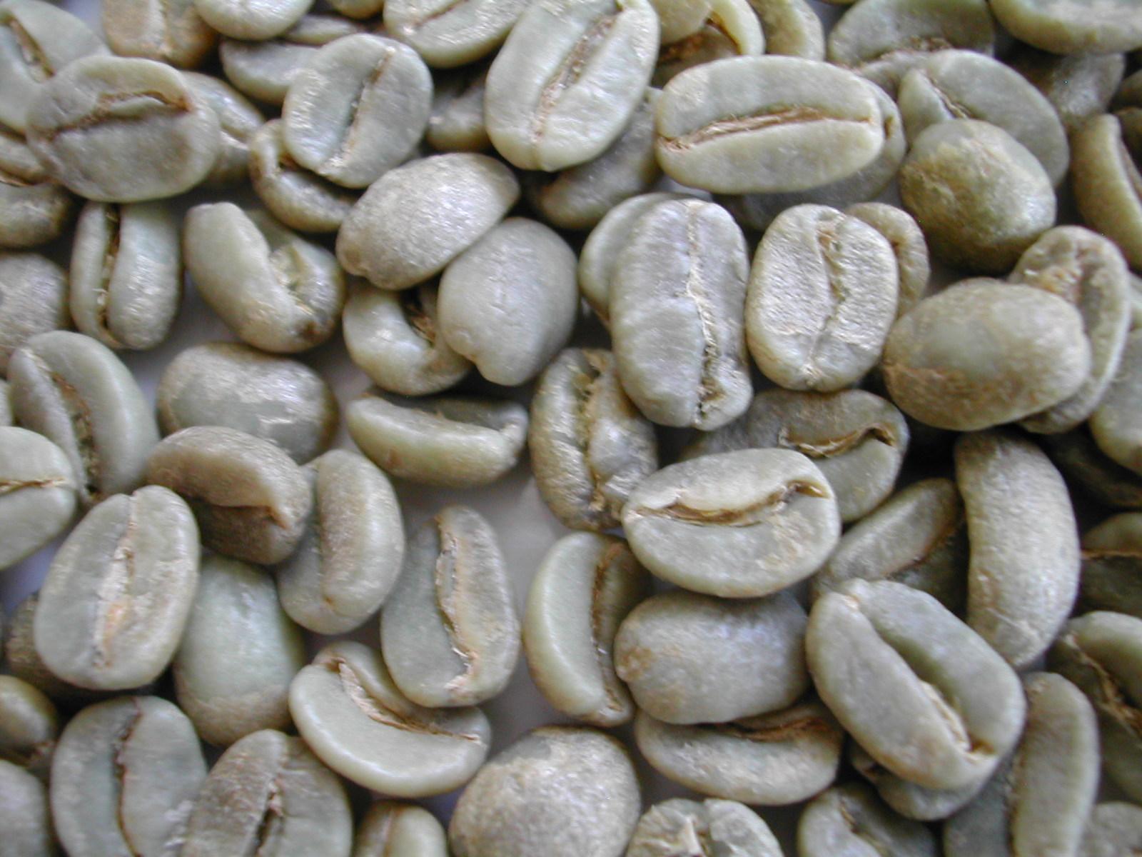 生豆 メーカー公式 JAS認証有機栽培 当店限定販売 PERU コチャパンパ 1kg