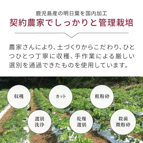 青汁 明日葉 粉末 【 鹿児島 】 お試し 100g 国産 明日葉茶 あしたば