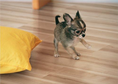 【法人様限定】 メーカー直送 イクタ 床材 プリオス介護とペット 2P(2分ツヤ) 床暖房対応品 捨貼り工法専用