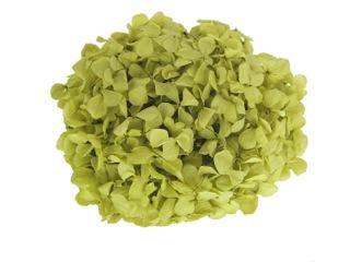 小さめ花びらのアジサイ 空間埋めにも FLアンデスアジサイ ピスタチオグリーン 約20g入り プリザーブドフラワー 上品 florever いつでも送料無料 花資材 花材 フロールエバー