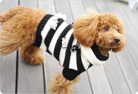 캔디 베어 스웨터