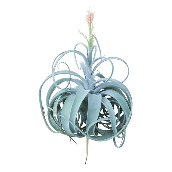 人工観葉植物 キセログラフィカピック花付き(1個) ba290 エアプランツ (代引き不可) インテリアグリーン 造花 AIRPLANT PICK