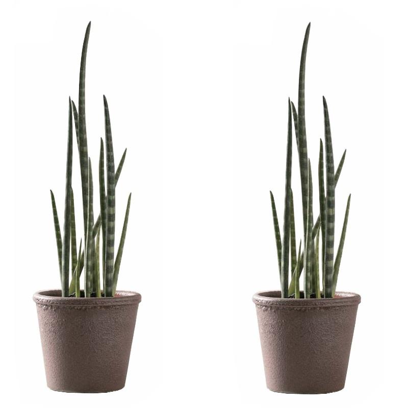送料無料 新品 インテリアの雰囲気や空間のテイストに合わせてスタイリング 代引き不可 人工観葉植物 サンセベリアポット シグネ18P 29-b 直営ストア インテリアグリーン フェイクグリーンコーディネート 2個セット