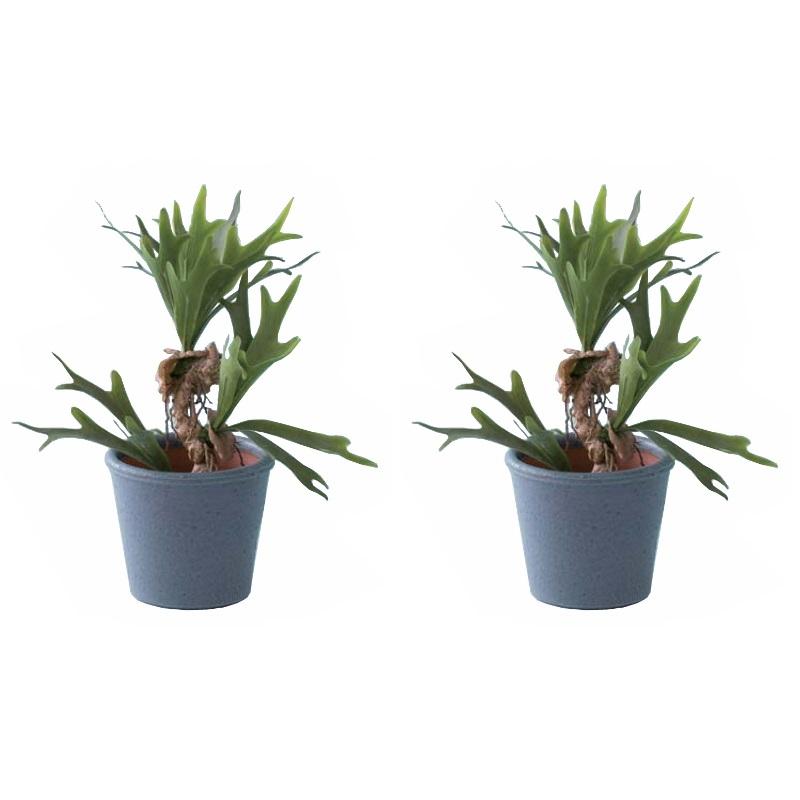 人工観葉植物 ビカクシダポット52&シグネ18B (2個セット) 31-c (代引き不可) インテリアグリーン フェイクグリーンコーディネート