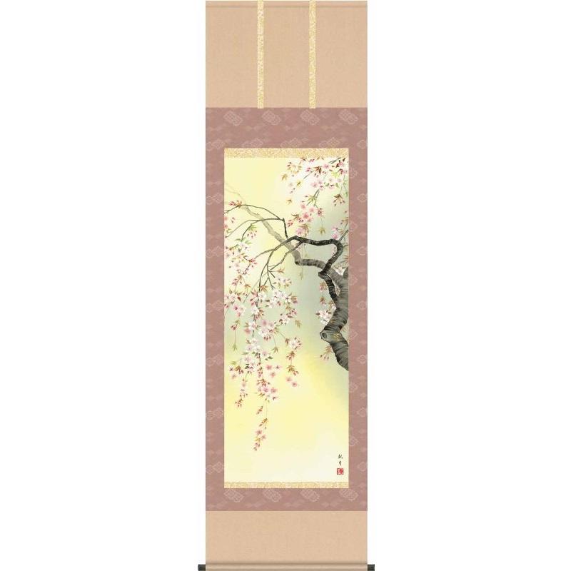 [掛軸][桜花爛漫]森山観月[尺五][花鳥画の掛軸][H29A6-09A]【代引き不可】