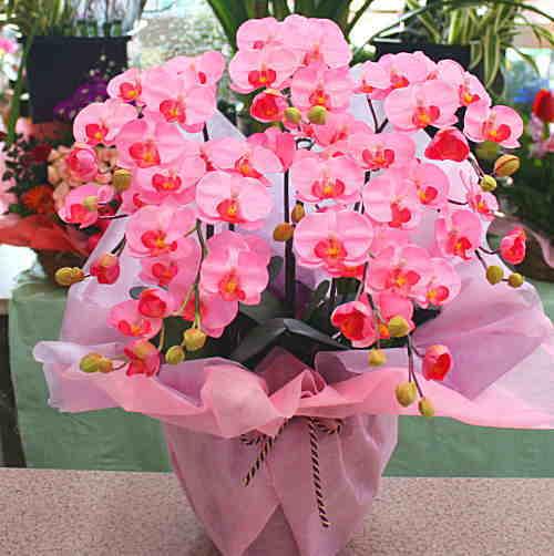 胡蝶蘭 光触媒【造花】k5-4s ミディタイプ ピンク色 5本立て