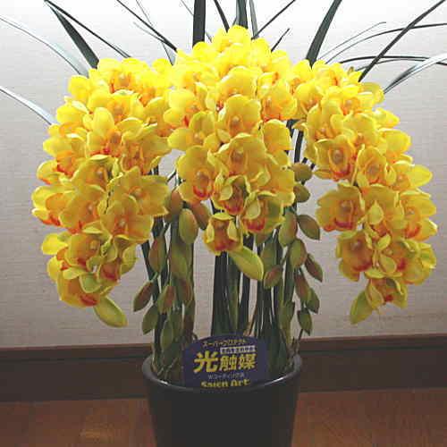シンピジューム 黄色 5本立ち Mサイズ 光触媒【造花】本物そっくり 花 ギフト