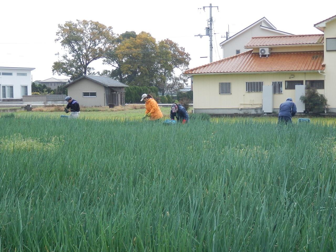 青ネギ7kg 徳島県産