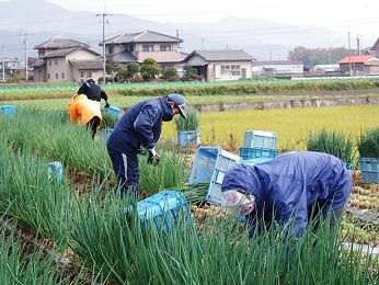 青ねぎ10kg 徳島県産