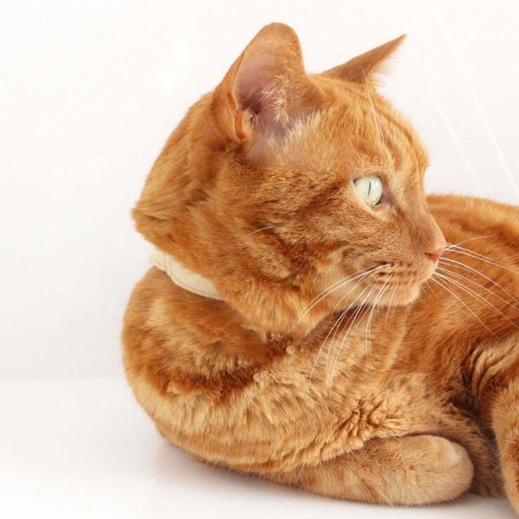 柔らかい軽い素材で 猫に優しい 嫌がらない と好評 品質保証 引っかけても外れる安全バックル 猫 ねこともカラー nekotomoCOLLAR 流行 フェルト 首輪 日本製