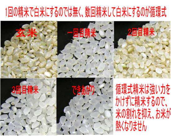 送料無料27年会津ササニシキ玄米30kg(白米は27kg)【米30kg送料無料】P20Feb16