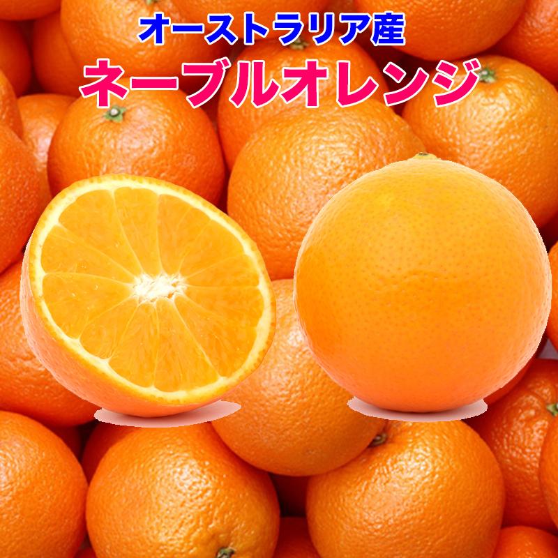 NEW売り切れる前に☆ オーストラリア ネーブルオレンジ オレンジ 送料無料 ネーブル 糖度保証 オーストラリア産 5kg お気にいる 22玉前後