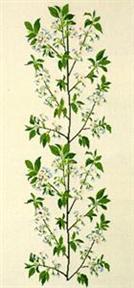 フレメ クロスステッチ 刺繍キット 【桜の枝】 野の花 ハーブと薬草 デンマーク 輸入ししゅうキット