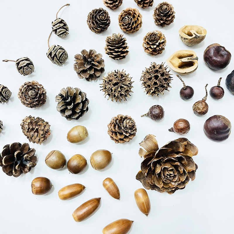 クリスマスリース 手作り材料セット 送料無料 ハンドメイド 材料 パーツ 松ぼっくり どんぐり 新作 人気 セット 高品質 手作りクリスマスリース 松の実 木の実 杉の実 くるみ 木の実のみ とちの実