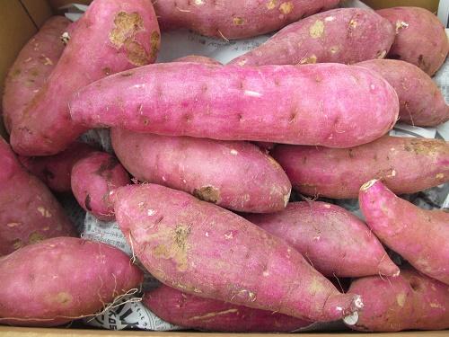 商品一覧>野菜>根菜>種子島産 安納芋