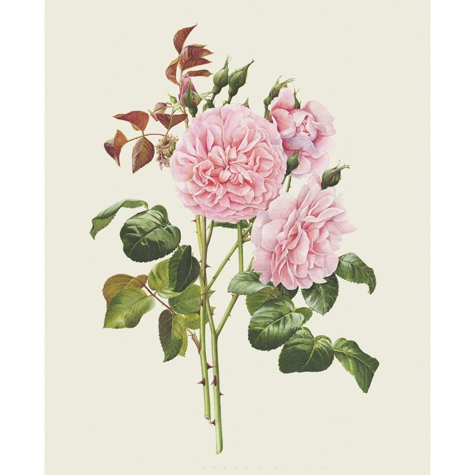 「ストロベリー・ヒル」 限定版画 - 'Strawberry Hill' Limited Edition Print