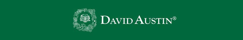 デビッド・オースチン・ロージズ:新規オープンしました