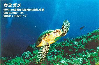POP & ディスプレイシリーズバックライトフィルムFP-M 厚口610mm×20mIJR24-58PD【代引き不可】