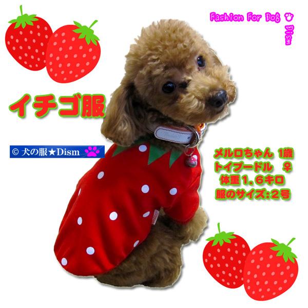 鮮度100%ベリベリー可愛い♪ 犬服 イチゴ服(超小型犬・小型犬・中型用犬)【犬の服2点購入でメール便送料無料】ストロベリー ドッグウェア
